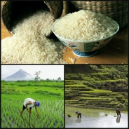 Agriculture in the Philippines. (Photo source: www.yahoo.com)