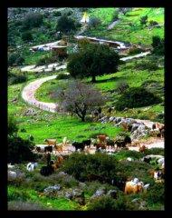 Multi purpose farmland in Israel