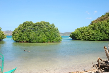 Philippine mangroves are touristic destinations and need to be protected as natural wonder and treasure.