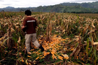 The current dry spell has been plaguing the Philippine Islands and its farmers by causing crops to dwindle and diminish because of the lack of rain. (Photo by Greenpeace Southeast Asia/Courtesy Flickr)